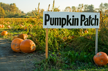 Pumpkin patch with pumpkin and sign