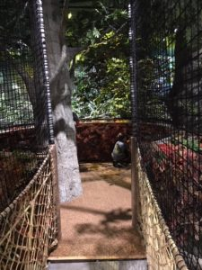 Bridge to an indoor treehouse