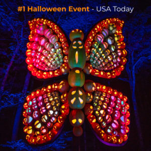 Light up butterfly display at Dollywood