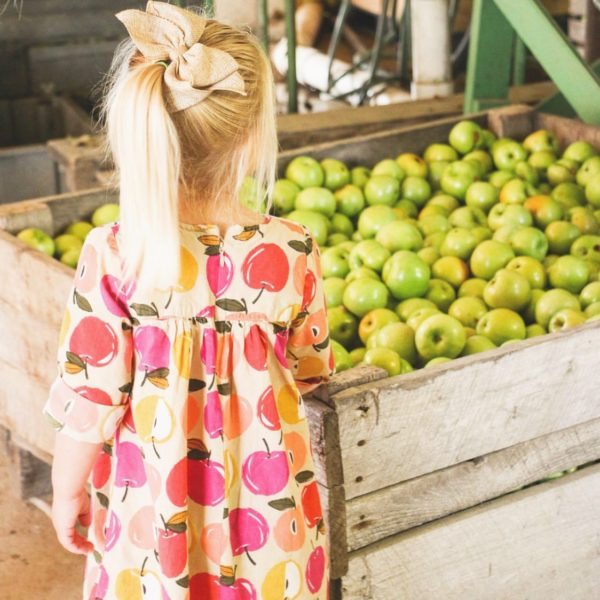 Little girl looking at a bin full of apples at the apple orchard