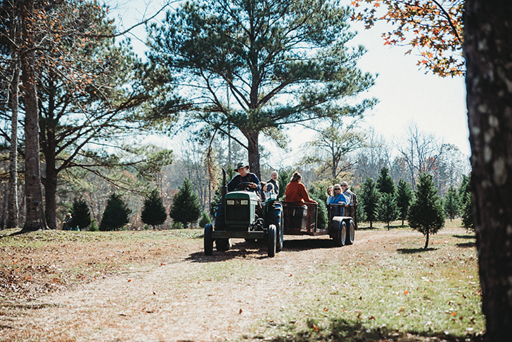 Tractor pulling people in a wagon around a Christmas tree farm